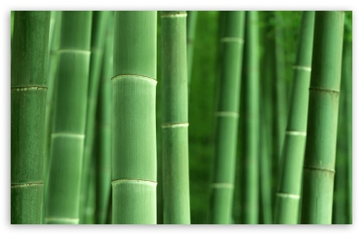 Green Bamboo HD wallpaper for Wide 16:10 5:3 Widescreen WHXGA WQXGA WUXGA WXGA WGA ; HD 16:9 High Definition WQHD QWXGA 1080p 900p 720p QHD nHD ; Standard 4:3 5:4 3:2 Fullscreen UXGA XGA SVGA QSXGA SXGA DVGA HVGA HQVGA devices ( Apple PowerBook G4 iPhone 4 3G 3GS iPod Touch ) ; Tablet 1:1 ; iPad 1/2/Mini ; Mobile 4:3 5:3 3:2 16:9 5:4 - UXGA XGA SVGA WGA DVGA HVGA HQVGA devices ( Apple PowerBook G4 iPhone 4 3G 3GS iPod Touch ) WQHD QWXGA 1080p 900p 720p QHD nHD QSXGA SXGA ;