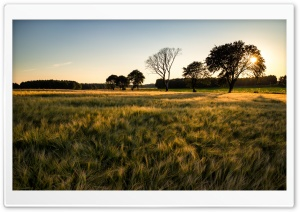 Green Barley Field HD Wide Wallpaper for Widescreen