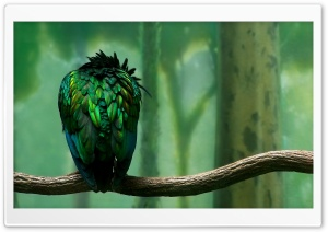 Green Bird HD Wide Wallpaper for Widescreen