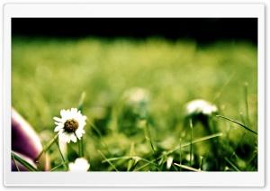 Green Blossom Ultra HD Wallpaper for 4K UHD Widescreen desktop, tablet & smartphone