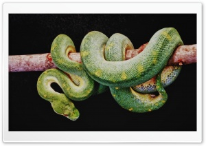 Green Boa Constrictor HD Wide Wallpaper for 4K UHD Widescreen desktop & smartphone