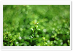 Green Bokeh HD Wide Wallpaper for Widescreen