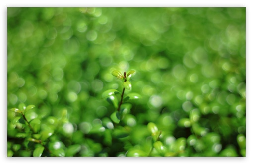 Green Bokeh ❤ 4K UHD Wallpaper for Wide 16:10 5:3 Widescreen WHXGA WQXGA WUXGA WXGA WGA ; 4K UHD 16:9 Ultra High Definition 2160p 1440p 1080p 900p 720p ; UHD 16:9 2160p 1440p 1080p 900p 720p ; Standard 4:3 5:4 3:2 Fullscreen UXGA XGA SVGA QSXGA SXGA DVGA HVGA HQVGA ( Apple PowerBook G4 iPhone 4 3G 3GS iPod Touch ) ; Smartphone 5:3 WGA ; Tablet 1:1 ; iPad 1/2/Mini ; Mobile 4:3 5:3 3:2 16:9 5:4 - UXGA XGA SVGA WGA DVGA HVGA HQVGA ( Apple PowerBook G4 iPhone 4 3G 3GS iPod Touch ) 2160p 1440p 1080p 900p 720p QSXGA SXGA ;