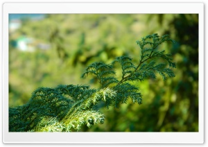 Green Branch HD Wide Wallpaper for Widescreen
