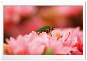 Green Bug HD Wide Wallpaper for Widescreen