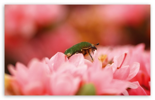 Green Bug ❤ 4K UHD Wallpaper for Wide 16:10 5:3 Widescreen WHXGA WQXGA WUXGA WXGA WGA ; 4K UHD 16:9 Ultra High Definition 2160p 1440p 1080p 900p 720p ; Standard 4:3 5:4 3:2 Fullscreen UXGA XGA SVGA QSXGA SXGA DVGA HVGA HQVGA ( Apple PowerBook G4 iPhone 4 3G 3GS iPod Touch ) ; Tablet 1:1 ; iPad 1/2/Mini ; Mobile 4:3 5:3 3:2 16:9 5:4 - UXGA XGA SVGA WGA DVGA HVGA HQVGA ( Apple PowerBook G4 iPhone 4 3G 3GS iPod Touch ) 2160p 1440p 1080p 900p 720p QSXGA SXGA ;