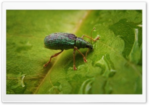 Green Bug On A Leaf HD Wide Wallpaper for Widescreen