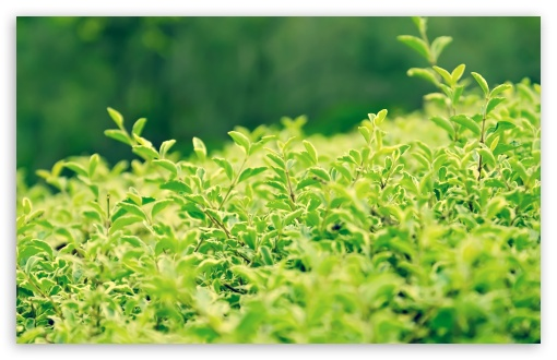 Green Bushes ❤ 4K UHD Wallpaper for Wide 16:10 5:3 Widescreen WHXGA WQXGA WUXGA WXGA WGA ; 4K UHD 16:9 Ultra High Definition 2160p 1440p 1080p 900p 720p ; Standard 4:3 5:4 3:2 Fullscreen UXGA XGA SVGA QSXGA SXGA DVGA HVGA HQVGA ( Apple PowerBook G4 iPhone 4 3G 3GS iPod Touch ) ; Tablet 1:1 ; iPad 1/2/Mini ; Mobile 4:3 5:3 3:2 16:9 5:4 - UXGA XGA SVGA WGA DVGA HVGA HQVGA ( Apple PowerBook G4 iPhone 4 3G 3GS iPod Touch ) 2160p 1440p 1080p 900p 720p QSXGA SXGA ; Dual 16:10 5:3 16:9 4:3 5:4 WHXGA WQXGA WUXGA WXGA WGA 2160p 1440p 1080p 900p 720p UXGA XGA SVGA QSXGA SXGA ;