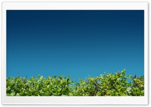 Green Bushes Against A Blue Sky HD Wide Wallpaper for Widescreen