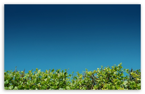 Green Bushes Against A Blue Sky ❤ 4K UHD Wallpaper for Wide 16:10 5:3 Widescreen WHXGA WQXGA WUXGA WXGA WGA ; 4K UHD 16:9 Ultra High Definition 2160p 1440p 1080p 900p 720p ; Standard 4:3 5:4 3:2 Fullscreen UXGA XGA SVGA QSXGA SXGA DVGA HVGA HQVGA ( Apple PowerBook G4 iPhone 4 3G 3GS iPod Touch ) ; Tablet 1:1 ; iPad 1/2/Mini ; Mobile 4:3 5:3 3:2 16:9 5:4 - UXGA XGA SVGA WGA DVGA HVGA HQVGA ( Apple PowerBook G4 iPhone 4 3G 3GS iPod Touch ) 2160p 1440p 1080p 900p 720p QSXGA SXGA ; Dual 16:10 5:3 16:9 4:3 5:4 WHXGA WQXGA WUXGA WXGA WGA 2160p 1440p 1080p 900p 720p UXGA XGA SVGA QSXGA SXGA ;