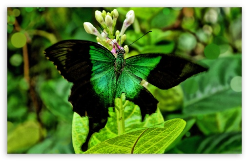 Green Butterfly ❤ 4K UHD Wallpaper for Wide 16:10 5:3 Widescreen WHXGA WQXGA WUXGA WXGA WGA ; 4K UHD 16:9 Ultra High Definition 2160p 1440p 1080p 900p 720p ; Standard 4:3 5:4 3:2 Fullscreen UXGA XGA SVGA QSXGA SXGA DVGA HVGA HQVGA ( Apple PowerBook G4 iPhone 4 3G 3GS iPod Touch ) ; iPad 1/2/Mini ; Mobile 4:3 5:3 3:2 16:9 5:4 - UXGA XGA SVGA WGA DVGA HVGA HQVGA ( Apple PowerBook G4 iPhone 4 3G 3GS iPod Touch ) 2160p 1440p 1080p 900p 720p QSXGA SXGA ;