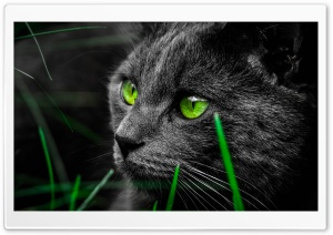 Green Cat Eyes in the Dark HD Wide Wallpaper for 4K UHD Widescreen desktop & smartphone