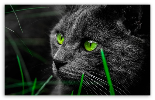 Green Cat Eyes in the Dark ❤ 4K UHD Wallpaper for Wide 16:10 5:3 Widescreen WHXGA WQXGA WUXGA WXGA WGA ; 4K UHD 16:9 Ultra High Definition 2160p 1440p 1080p 900p 720p ; UHD 16:9 2160p 1440p 1080p 900p 720p ; Standard 4:3 5:4 3:2 Fullscreen UXGA XGA SVGA QSXGA SXGA DVGA HVGA HQVGA ( Apple PowerBook G4 iPhone 4 3G 3GS iPod Touch ) ; Smartphone 5:3 WGA ; Tablet 1:1 ; iPad 1/2/Mini ; Mobile 4:3 5:3 3:2 16:9 5:4 - UXGA XGA SVGA WGA DVGA HVGA HQVGA ( Apple PowerBook G4 iPhone 4 3G 3GS iPod Touch ) 2160p 1440p 1080p 900p 720p QSXGA SXGA ; Dual 5:4 QSXGA SXGA ;