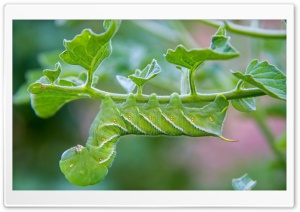 Green Caterpillar HD Wide Wallpaper for Widescreen