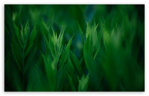 Download Green Coneflowers UltraHD Wallpaper