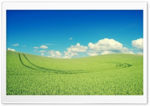 Green Crops HD Wide Wallpaper for Widescreen