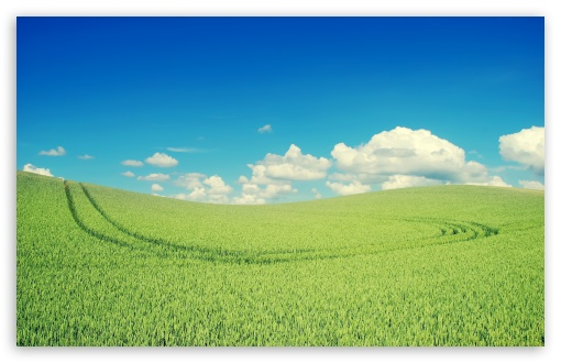 Green Crops HD wallpaper for Wide 16:10 5:3 Widescreen WHXGA WQXGA WUXGA WXGA WGA ; HD 16:9 High Definition WQHD QWXGA 1080p 900p 720p QHD nHD ; Standard 4:3 5:4 3:2 Fullscreen UXGA XGA SVGA QSXGA SXGA DVGA HVGA HQVGA devices ( Apple PowerBook G4 iPhone 4 3G 3GS iPod Touch ) ; Tablet 1:1 ; iPad 1/2/Mini ; Mobile 4:3 5:3 3:2 16:9 5:4 - UXGA XGA SVGA WGA DVGA HVGA HQVGA devices ( Apple PowerBook G4 iPhone 4 3G 3GS iPod Touch ) WQHD QWXGA 1080p 900p 720p QHD nHD QSXGA SXGA ; Dual 16:10 5:3 16:9 4:3 5:4 WHXGA WQXGA WUXGA WXGA WGA WQHD QWXGA 1080p 900p 720p QHD nHD UXGA XGA SVGA QSXGA SXGA ;