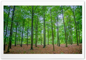 Green Deciduous Forest HD Wide Wallpaper for 4K UHD Widescreen desktop & smartphone