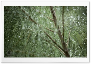 Green Droplets HD Wide Wallpaper for Widescreen