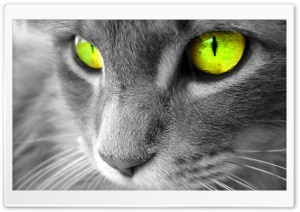 Green Eyed Cat HD Wide Wallpaper for Widescreen