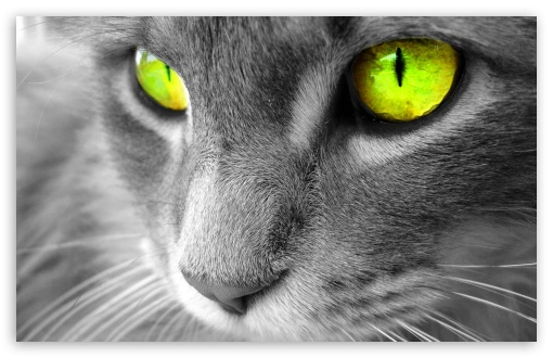 Green Eyed Cat HD wallpaper for Wide 16:10 5:3 Widescreen WHXGA WQXGA WUXGA WXGA WGA ; HD 16:9 High Definition WQHD QWXGA 1080p 900p 720p QHD nHD ; Standard 4:3 Fullscreen UXGA XGA SVGA ; iPad 1/2/Mini ; Mobile 4:3 5:3 16:9 - UXGA XGA SVGA WGA WQHD QWXGA 1080p 900p 720p QHD nHD ;