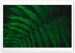 Green Fern Leaf Ultra HD Wallpaper for 4K UHD Widescreen desktop, tablet & smartphone
