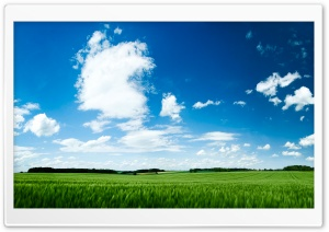 Green Field HD Wide Wallpaper for Widescreen