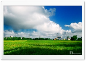 Green Field HD Wide Wallpaper for Widescreen