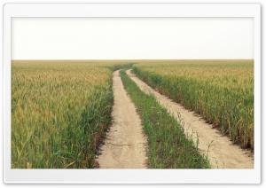 Green Field Ultra HD Wallpaper for 4K UHD Widescreen desktop, tablet & smartphone