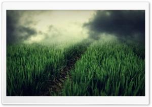 Green Field, Dark Fog HD Wide Wallpaper for 4K UHD Widescreen desktop & smartphone