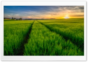 Green Field Spring HD Wide Wallpaper for Widescreen