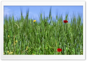 Green Field Spring 1 HD Wide Wallpaper for Widescreen