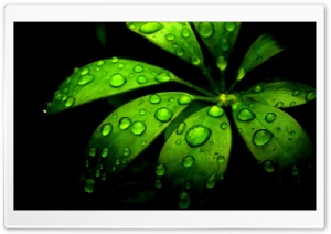 Green Flower HD Wide Wallpaper for Widescreen