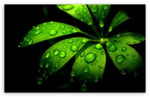 Green Flower HD wallpaper for Wide 16:10 5:3 Widescreen WHXGA WQXGA WUXGA WXGA WGA ; HD 16:9 High Definition WQHD QWXGA 1080p 900p 720p QHD nHD ; Standard 4:3 5:4 3:2 Fullscreen UXGA XGA SVGA QSXGA SXGA DVGA HVGA HQVGA devices ( Apple PowerBook G4 iPhone 4 3G 3GS iPod Touch ) ; Tablet 1:1 ; iPad 1/2/Mini ; Mobile 4:3 5:3 3:2 16:9 5:4 - UXGA XGA SVGA WGA DVGA HVGA HQVGA devices ( Apple PowerBook G4 iPhone 4 3G 3GS iPod Touch ) WQHD QWXGA 1080p 900p 720p QHD nHD QSXGA SXGA ;