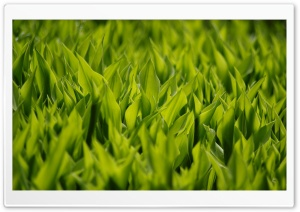 Green Flower Leaves HD Wide Wallpaper for Widescreen