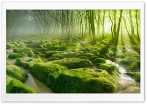 Green Forest HD Wide Wallpaper for Widescreen
