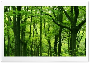Green Forest, Summer