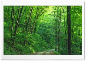Green Forest Trees, Road Ultra HD Wallpaper for 4K UHD Widescreen desktop, tablet & smartphone