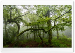 Green Forest Trees, Summer, Mist HD Wide Wallpaper for 4K UHD Widescreen desktop & smartphone