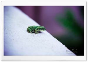 Green Frog HD Wide Wallpaper for Widescreen