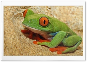 Green Frog With Orange Eyes HD Wide Wallpaper for Widescreen