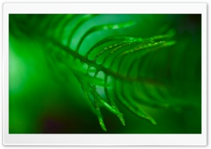 Green Frond Leaf Macro HD Wide Wallpaper for Widescreen