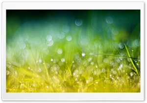 Green Gold Grass HD Wide Wallpaper for Widescreen