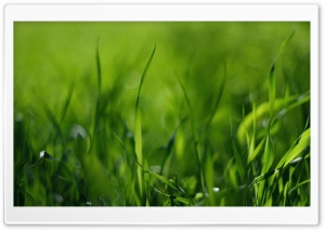 Green Gras HD Wide Wallpaper for Widescreen