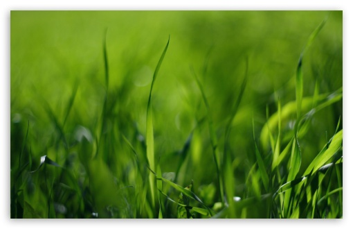 Green Gras HD wallpaper for Wide 16:10 5:3 Widescreen WHXGA WQXGA WUXGA WXGA WGA ; HD 16:9 High Definition WQHD QWXGA 1080p 900p 720p QHD nHD ; Standard 4:3 5:4 3:2 Fullscreen UXGA XGA SVGA QSXGA SXGA DVGA HVGA HQVGA devices ( Apple PowerBook G4 iPhone 4 3G 3GS iPod Touch ) ; Tablet 1:1 ; iPad 1/2/Mini ; Mobile 4:3 5:3 3:2 16:9 5:4 - UXGA XGA SVGA WGA DVGA HVGA HQVGA devices ( Apple PowerBook G4 iPhone 4 3G 3GS iPod Touch ) WQHD QWXGA 1080p 900p 720p QHD nHD QSXGA SXGA ;