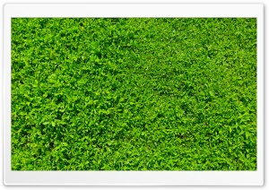 Green Grass 01 HD Wide Wallpaper for Widescreen