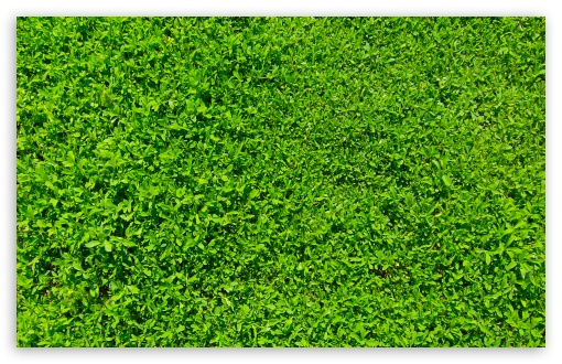 Green Grass 01 HD wallpaper for Wide 16:10 5:3 Widescreen WHXGA WQXGA WUXGA WXGA WGA ; HD 16:9 High Definition WQHD QWXGA 1080p 900p 720p QHD nHD ; Standard 4:3 5:4 3:2 Fullscreen UXGA XGA SVGA QSXGA SXGA DVGA HVGA HQVGA devices ( Apple PowerBook G4 iPhone 4 3G 3GS iPod Touch ) ; Tablet 1:1 ; iPad 1/2/Mini ; Mobile 4:3 5:3 3:2 16:9 5:4 - UXGA XGA SVGA WGA DVGA HVGA HQVGA devices ( Apple PowerBook G4 iPhone 4 3G 3GS iPod Touch ) WQHD QWXGA 1080p 900p 720p QHD nHD QSXGA SXGA ;