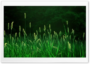 Green Grass HD Wide Wallpaper for 4K UHD Widescreen desktop & smartphone