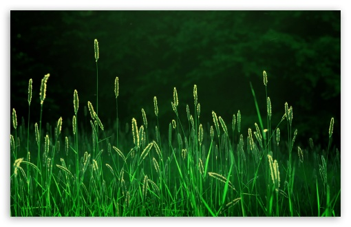 Green Grass ❤ 4K UHD Wallpaper for Wide 16:10 5:3 Widescreen WHXGA WQXGA WUXGA WXGA WGA ; 4K UHD 16:9 Ultra High Definition 2160p 1440p 1080p 900p 720p ; Standard 4:3 5:4 3:2 Fullscreen UXGA XGA SVGA QSXGA SXGA DVGA HVGA HQVGA ( Apple PowerBook G4 iPhone 4 3G 3GS iPod Touch ) ; Tablet 1:1 ; iPad 1/2/Mini ; Mobile 4:3 5:3 3:2 16:9 5:4 - UXGA XGA SVGA WGA DVGA HVGA HQVGA ( Apple PowerBook G4 iPhone 4 3G 3GS iPod Touch ) 2160p 1440p 1080p 900p 720p QSXGA SXGA ;