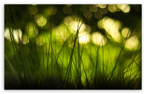 Green Grass HD wallpaper for Standard 4:3 5:4 Fullscreen UXGA XGA SVGA QSXGA SXGA ; Wide 16:10 5:3 Widescreen WHXGA WQXGA WUXGA WXGA WGA ; HD 16:9 High Definition WQHD QWXGA 1080p 900p 720p QHD nHD ; Other 3:2 DVGA HVGA HQVGA devices ( Apple PowerBook G4 iPhone 4 3G 3GS iPod Touch ) ; Mobile VGA WVGA iPhone iPad PSP Phone - VGA QVGA Smartphone ( PocketPC GPS iPod Zune BlackBerry HTC Samsung LG Nokia Eten Asus ) WVGA WQVGA Smartphone ( HTC Samsung Sony Ericsson LG Vertu MIO ) HVGA Smartphone ( Apple iPhone iPod BlackBerry HTC Samsung Nokia ) Sony PSP Zune HD Zen ; Tablet 2 Android ; Dual 5:4 QSXGA SXGA ;